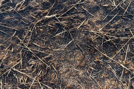 smut: Ash black smut and stubble. Burned field farm
