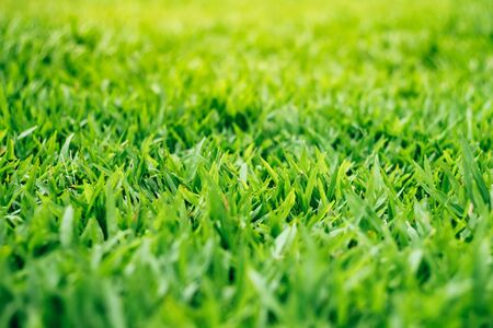 Natural green grass background with vintage filter