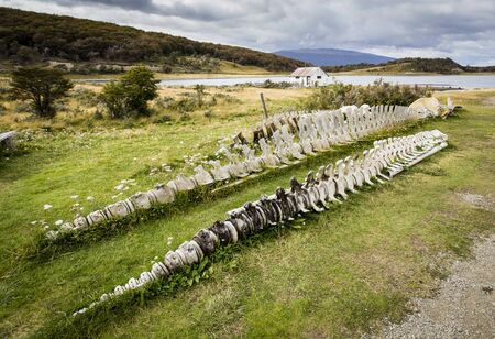 intact: A pair of intact whale skeletons in Tierra del Fuego Stock Photo