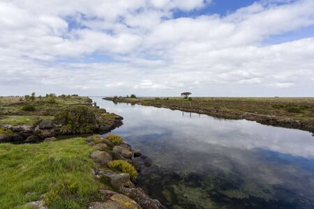 A saltmarsh at South Australia with a high diversity of marsh plants