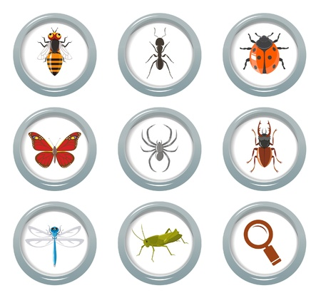 little insect: Insect icons set Illustration