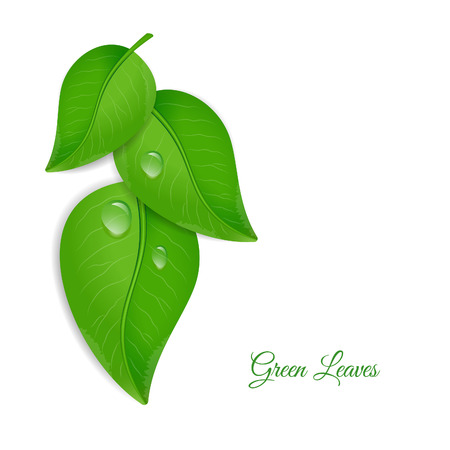 leaf water drop: Green leaves with water drops Illustration