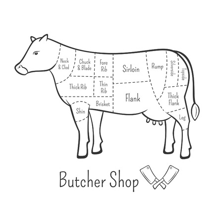 cow vector: British cuts of beef diagram and butchery design element