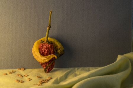 hugged: Hugged dry yellow and red hot peppers with seed around leaning against the wall