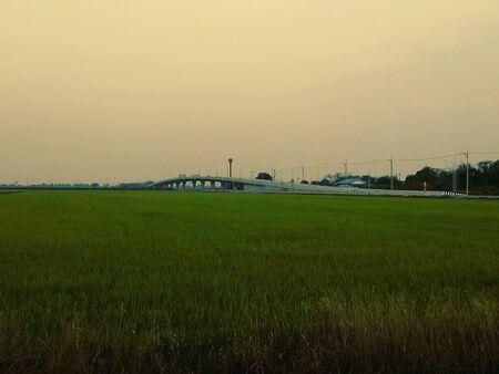brige: Cornfield and brige in Chachoengsao Thailand