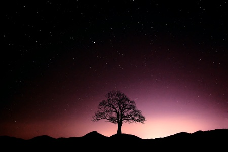 starry night: shasta starry night