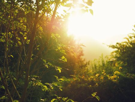 Glare direct light coming through green summer trees and bushes foliage near sunset hour photo