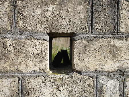 raspy: Stone wall with a hole which can be used as background Stock Photo