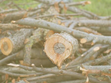 altogether: Logs with cut tree branches put altogether