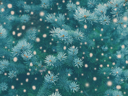 christmas atmosphere: Blue spruce background with falling snow,christmas magic toned effect. Greeting card