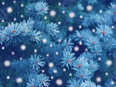 Blue spruce background with falling snow,christmas magic toned effect Stockfoto