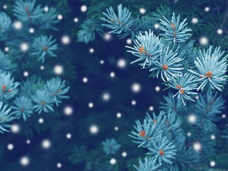 Blue spruce background with snow,christmas magic toned effect 스톡 콘텐츠