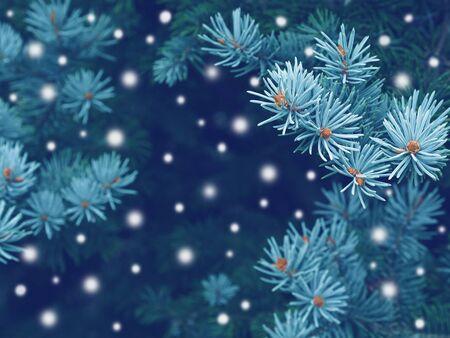 눈, 크리스마스 마법의 톤된 효과와 푸른 가문비 나무 배경