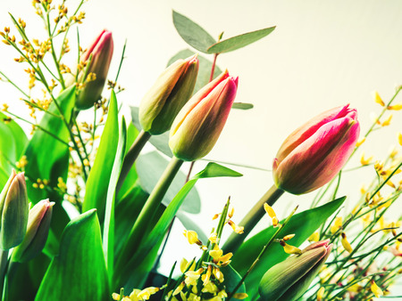 Beautiful bunch of pink tulips. Woman, mother day Easter greeting concept
