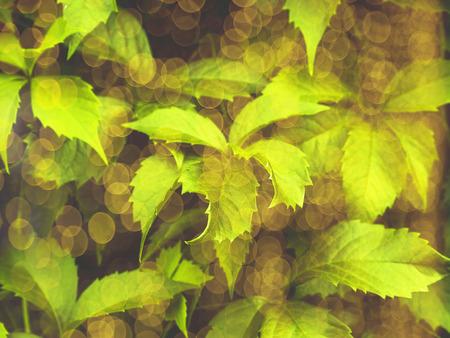 Neon green toned foliage trendy background with bokeh. Summer Фото со стока