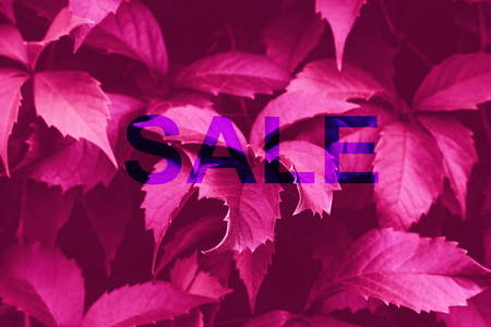 Neon pink toned foliage trendy art background with word Sale. Shopping concept Фото со стока