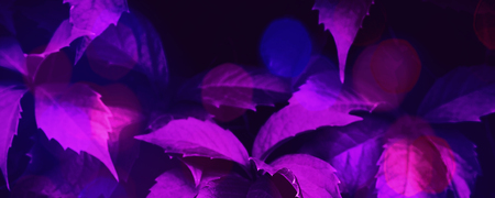 Purple ultra violet toned foliage trendy background with fluorescent bokeh