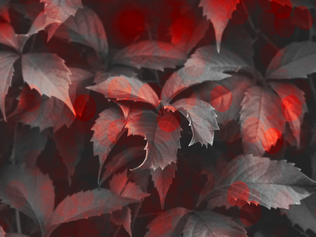 Gray foliage with red bokeh trendy color dark background