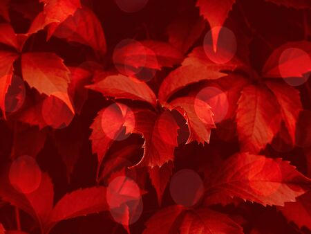 Red toned foliage trendy background with green bokeh. Autumn