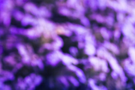 Abstract blurred natural purple background. Design backdrop