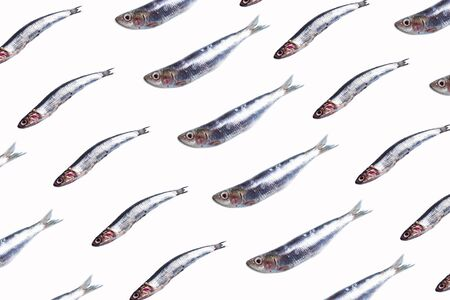 Anchovies fish pattern on white background. Food concept