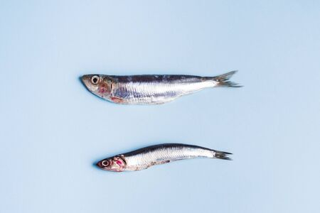 Two fresh anchovies, big ans small, on light blue background.