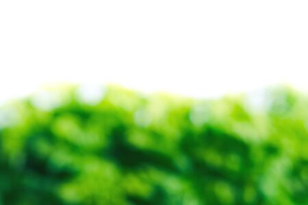 Abstract blurred natural green background. Design backdrop Stock Photo