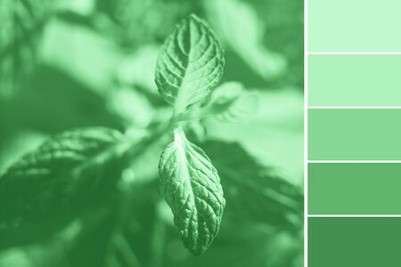Mint green color 2020 natural palette swatch with macro shot of plant as sample 스톡 콘텐츠