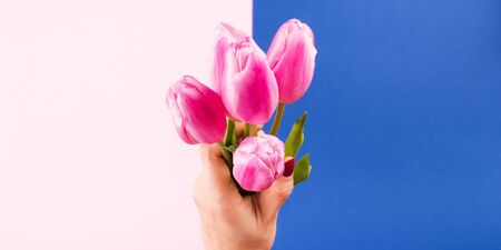 Female hand with red manicure holding beautiful tulips on pink and classic blue color of 2020 split duotone trendy backdrop. Festive flat lay mockup for greeting card or other projects