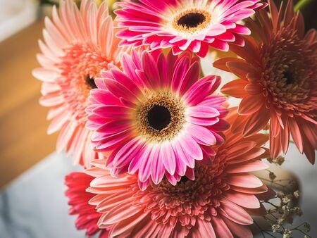 Pink gerbera daisy flowers bouquet in a vase. Closeup, petals detail. Floral arrangement