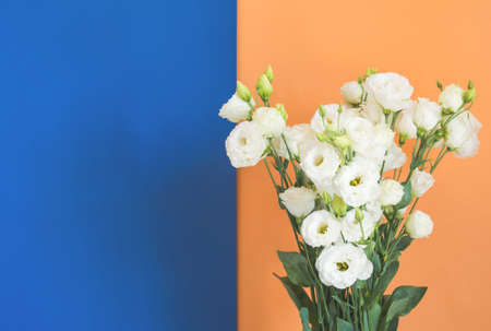 Beautiful white flowers bouquet on cantaloupe orange and classic blue background. Trendy duotone color design background. Copy space