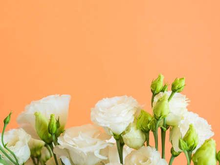 Beautiful white eustoma flowers bouquet on cantaloupe orange background. Trendy design background Banco de Imagens