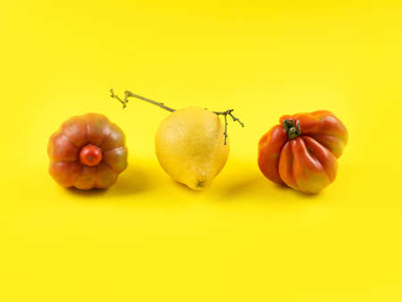 Italian lemon fruit and tomato vegetables on yellow background. Ugly but delicious organic fruit food concept