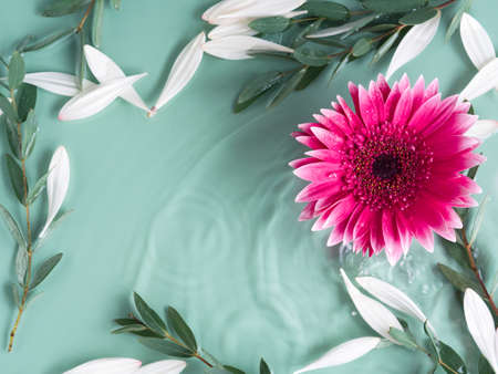 Beautiful green summer beauty background with vibrant pink gerbera daisys in water with ripples