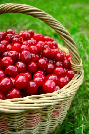 Basket with cherries Stock Photo - 5305821