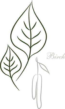 Birch leaf sketch Stock Photo - 5735161