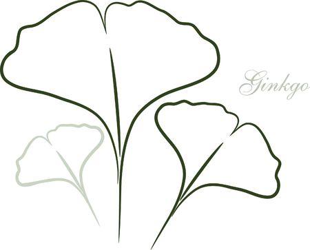 ginkgo leaf: Ginkgo leaf sketch