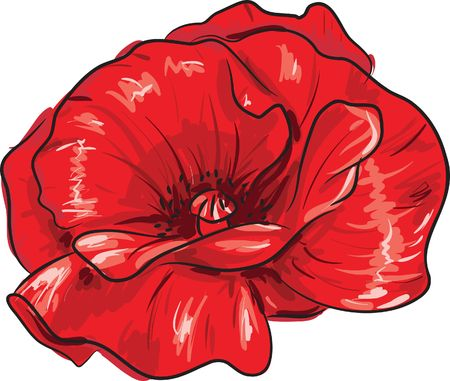 pencil plant: Red poppy flower - freehand style painting Stock Photo