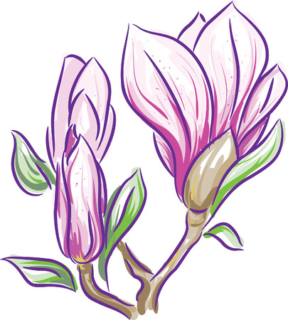 magnolia tree: Magnolia branch - freehand style painting