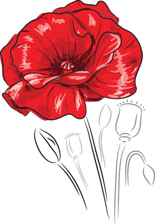 Red poppy flower - freehand style painting Vector