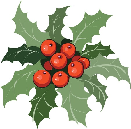Holly branch Vector
