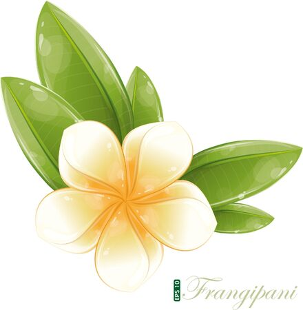 White frangipani flower, eps-10