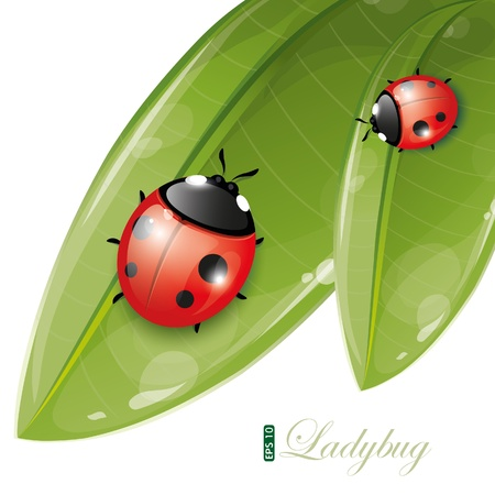 Green leaves design with ladybug, eps-10 Vector