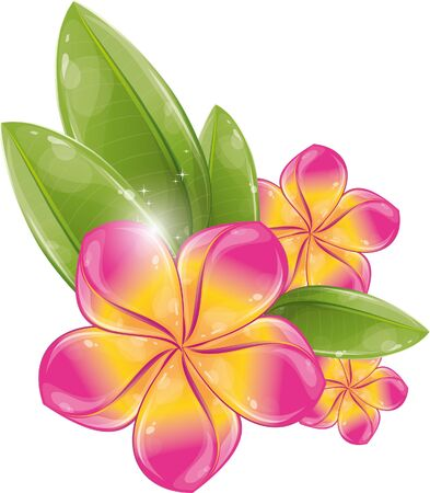 Pink frangipani flower, vector illustration, eps-10 Stock Vector - 9363865