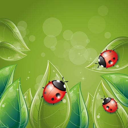 mariquitas: Verde dise�o de hojas con Mariquita, ilustraci�n, eps-10 de vectores Vectores