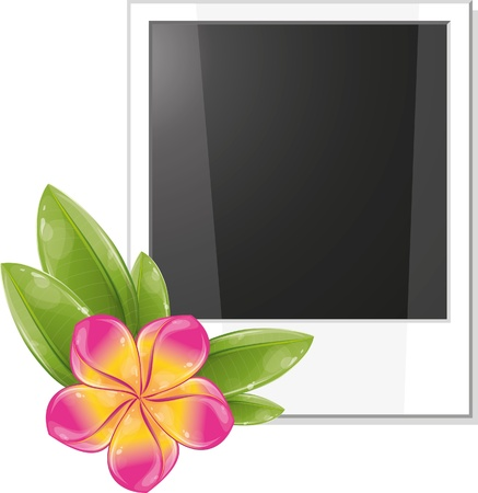 Blank photo frame with pink frangipani flower, vector illustration, eps-10