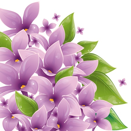 Floral design with lilac, vector illustration, eps-10 Stock Vector - 9362476