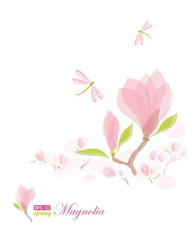 Magnolia branch and dragonfly, nature background, vector illustration, eps-10