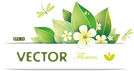 Green leaves and jasmin flowers, vector illustration, eps-10