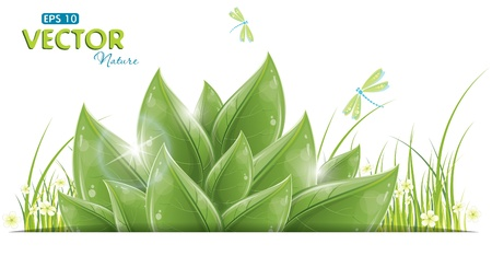 Green leaves and dragonfly isolated on white, vector illustration, eps-10 Stock Vector - 12497764